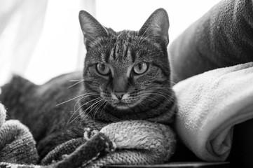 Katze auf Decken
