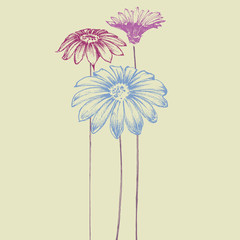 Fototapete - Hand drawn flowers. Beautiful daisy design for festive events