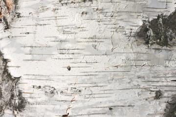 birch bark texture natural background paper close-up Fototapete