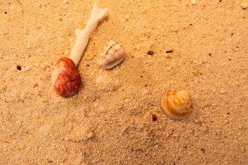 Sand with rocks and shells. From The Turks and Caicos Islands, Caribbean.