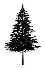 Silhouette of pine tree. Can be used as poster, badge, emblem, banner, icon, sign, decor.