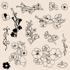 Flowers outlines. A set of small floral twigs drawing elements