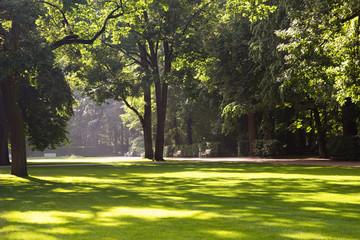 summer park landscape