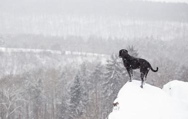Black mutt dog outside in winter snow.