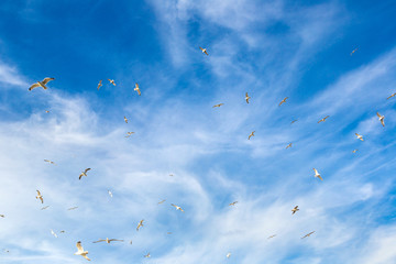 A lot of seagull