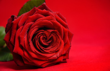 Valentine's day background with amazing red rose and copy space