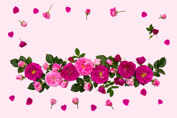 Frame of pink roses (shrub rose), buds and petals on a pink background with space for text. Top view. Flat lay. Valentine composition.