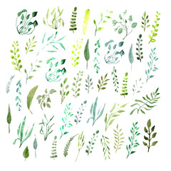 Set watercolor Botanical elements. Green leaves, twigs, grass. Hand-drawn elements.