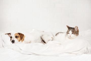 Sleeping pets on bed