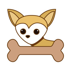 cute chihuahua dog icon over white background. colorful design. vector illustration