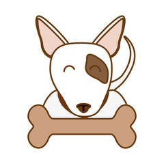 bull terrier dog icon over white background. colorful design. vector illustration