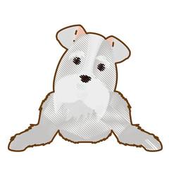 schnauzer dog icon over white background. colorful design. vector illustration