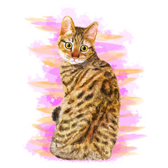 Watercolor portrait of California Spangled cute cat with dots, stripes isolated on pink background. Hand drawn sweet home pet. Bright realistic colors. Greeting card design. Clip art. Add your text