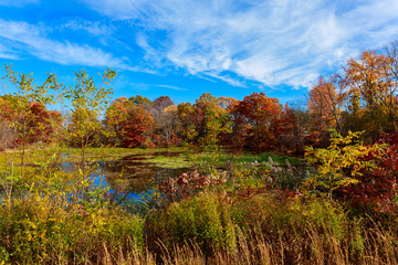 colorful autumn forest lake river sky clouds    cloud