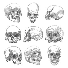 Big set of anatomic skulls in different directions and conditions, weathered and museum quality, medical study detailed hand drawn illustration. T-shirt rock music prints. Vector Art.
