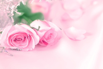 soft sweet rose flowers for love romance background