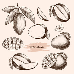 Vector mango hand drawn sketch . Sketch vector  food illustration. Vintage style