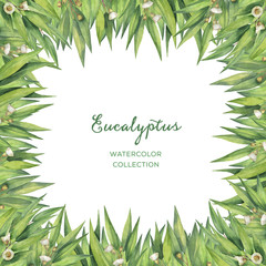 Watercolor green floral card with eucalyptus leaves and branches isolated on white background.