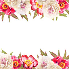 White and red peonoes flower watercolor illustration background