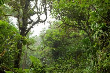 Deep in lush foggy rainforest