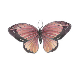 Beautiful butterfly on white background isolated. Hand-drawn watercolor illustration.