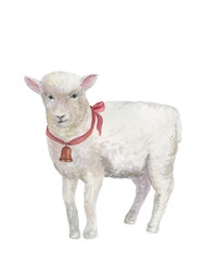 Watercolor painting a white suffolk lamb with a bell around his neck
