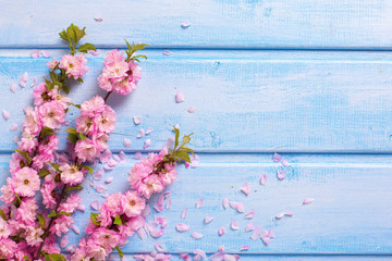 Background  with  pink  sakura flowers on blue wooden planks.