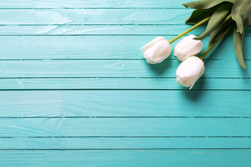 Fresh three white tulips on turquoise wooden planks.