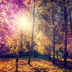 wonderful autumn landscape. majectic trees with colored leaf. retro style. instagram effect. artistic creative image. used as background