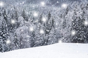 Beautiful snowfall with forest trees and snowy field.