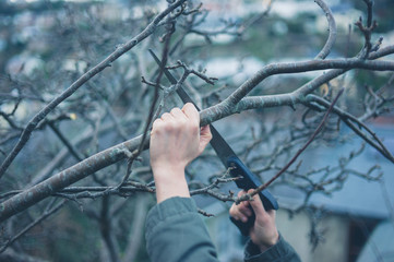 Hands sawing a tree branch