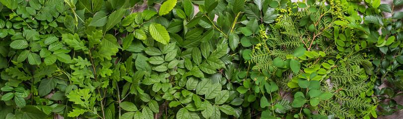 Many green leaf