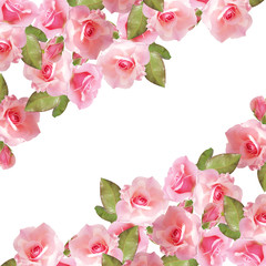 Beautiful floral background with pink roses. Isolated