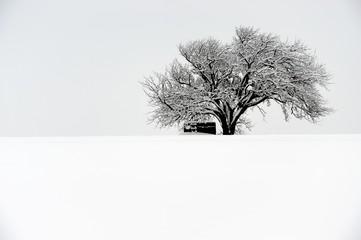Baum auf einem verschneiten Feld