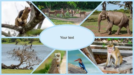 Collage of animals in Sri Lanka and India. The fauna on the island of Ceylon and safari in the Yala National Park.