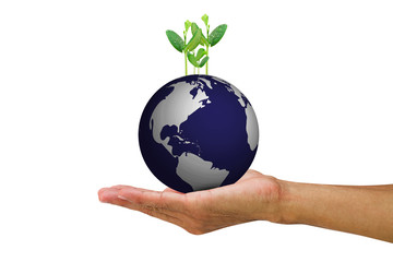 Man's hand holding growing young green sprouts from globe on white background
