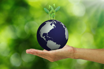 Man's hand holding growing young green sprouts from globe on blurred green bokeh background