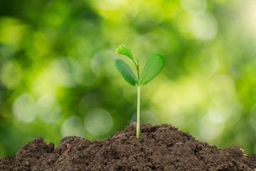 Young green sprout growing out from soil isolated on blurred green bokeh background
