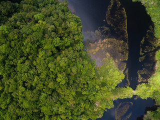 Top View of River in a Rainforest