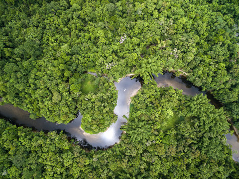 Top View of Amazon Rainforest, Brazil