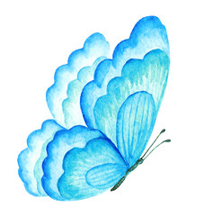 Summer Butterfly. Watercolor illustration