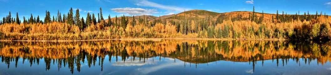 Panorama Autumn impression, Chena River State Park, Alaska