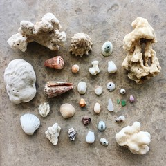 Collection of seashells and coral