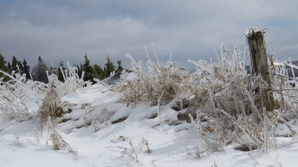 Ice covered fence and grass in the winter