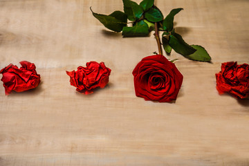 1 red rose lying on a wooden table with lumps of red paper