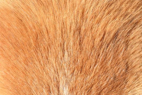 short dog fur texture