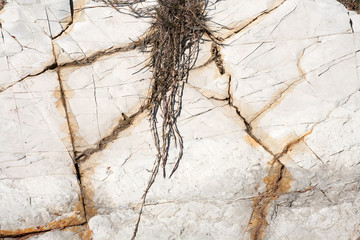 Backdrop, background, texture of the stone.