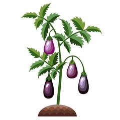 Eggplant bush.