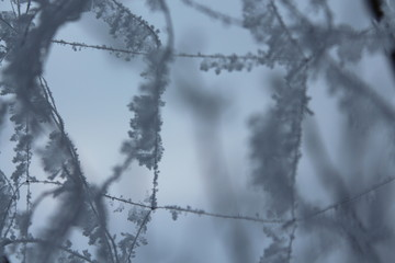 frost on suspended plexus, focus, background