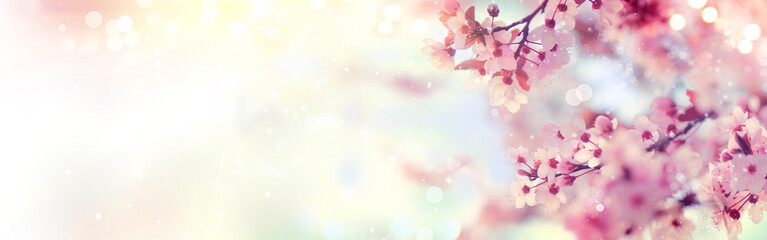 Affisch - Spring border or background art with pink blossom. Beautiful nature scene with blooming tree and sun flare